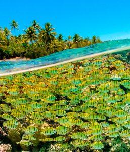plongée polynésie française